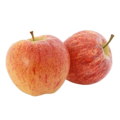 Яблоко Старкинг תפוח עץ סטארקינג